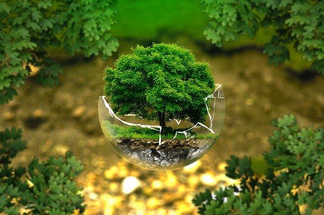 Le marketing vert : Comment les entreprises intègrent l'environnement dans leurs différentes activités ?
